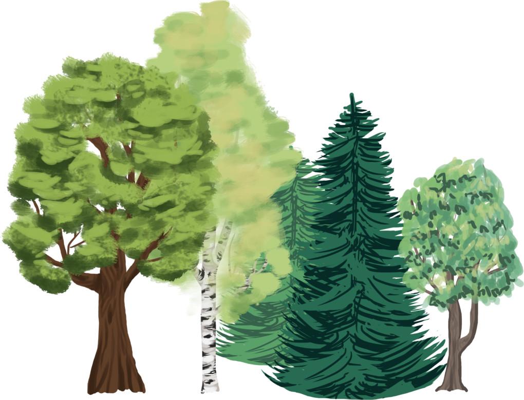 des_arbres