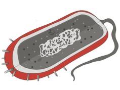 Bakterien Aufbau