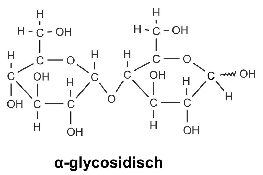alpha-glycosidische Bindung in Maltose