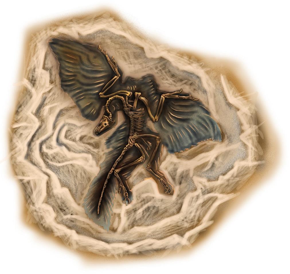 Brückentier: Fossil eines Archaeopteryx