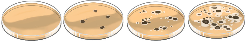 Bakterienwachstum auf Nährmedium mit Antibiotikum