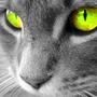 Beautiful cat   cats wallpaper %2816121794%29   fanpop%281%29