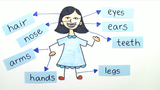 Body – Vokabeln zu den Körperteilen (1)