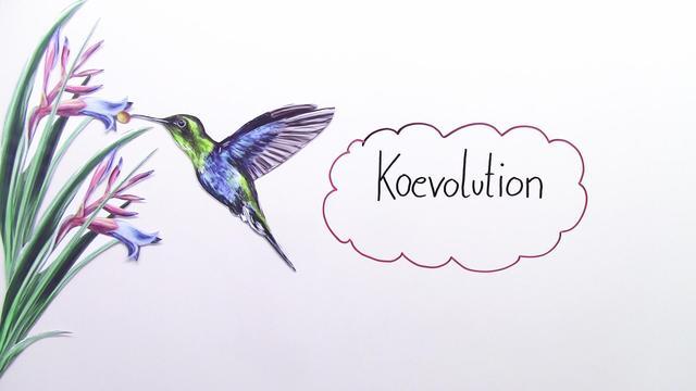 Koevolution