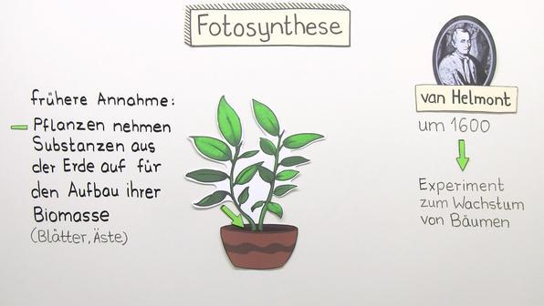 fotosynthese und atmung biologie online lernen. Black Bedroom Furniture Sets. Home Design Ideas