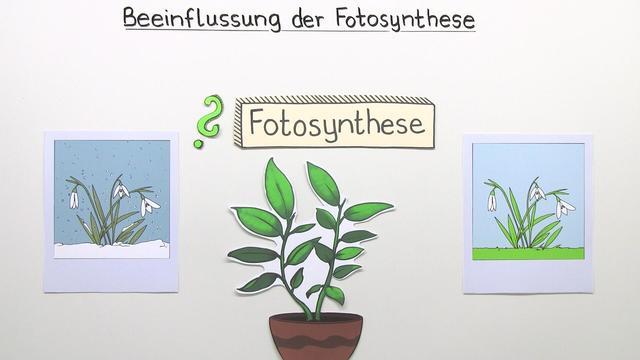 Beeinflussung der Fotosyntheseleistung