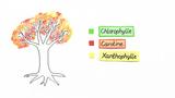 Chromatographie der Blattfarbstoffe – Chlorophyll, Carotinoide, Xantophyll