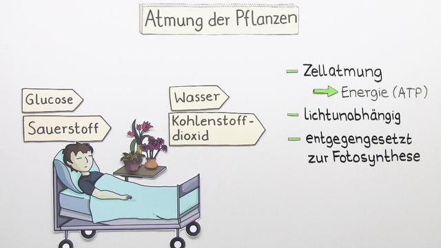 atmung bei pflanzen einfach erkl rt in 6 minuten. Black Bedroom Furniture Sets. Home Design Ideas