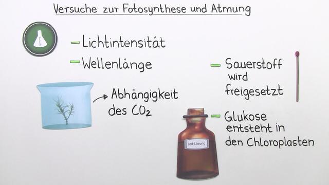 Fotosynthese – experimentelle Nachweise der Reaktion
