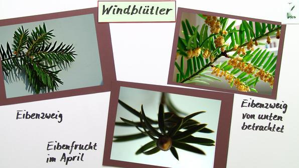 11551 windbest%c3%a4ubung windbl%c3%bctler
