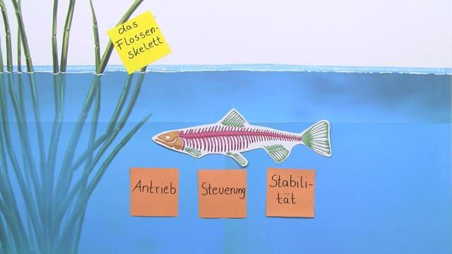 Arbeitsblatt Fische Grundschule : Skelett der fische biologie online lernen