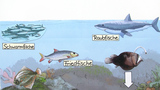 Vielfalt der Fische