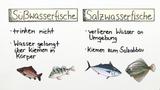 Süßwasserfische und Salzwasserfische