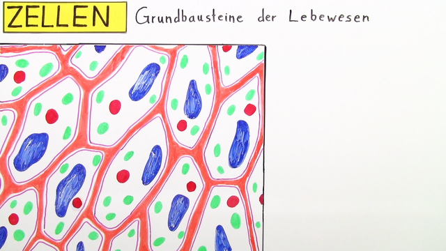 Zellen – die Grundbausteine von Pflanze, Mensch und Tier