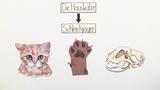 Die Katze - ein Schleichjäger