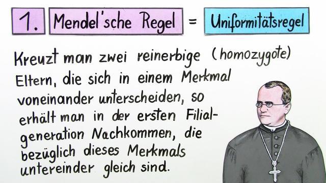 Singlebörse raum trier Damen - wegzuzweit.de
