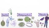 Entstehung von Mehrzellern
