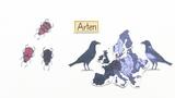 Die Entstehung von Arten