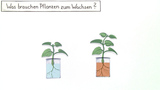 Was brauchen Pflanzen zum wachsen?