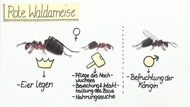 Partnersuche biologie