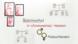 Stammbaumanalyse – Bluterkrankheit