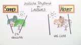 abiotischer Faktor Licht – Einfluss auf Pflanzen