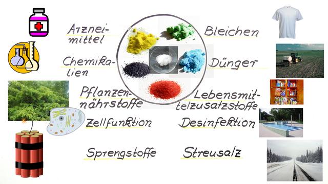 Salze – Einführung