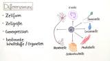 Zelldifferenzierung und Gewebe