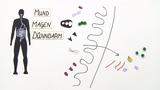 Verdauung und Enzymwirkung