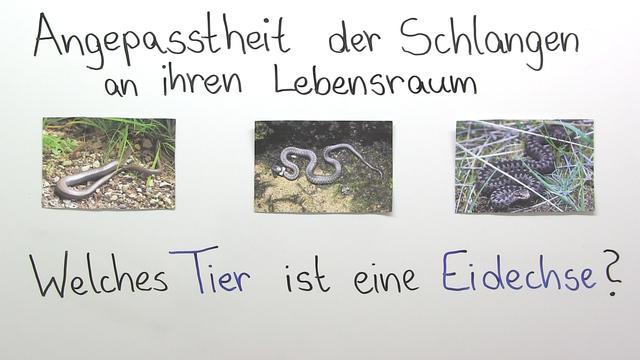 Schlangen – Anpassung und Lebensweise