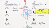 Nervensystem – Codierung von Informationen