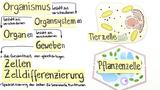 Zelldifferenzierung  – Organisationsebenen von Tier- und Pflanzenzellen