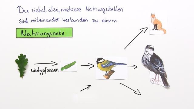 Nahrungsbeziehungen im Ökosystem
