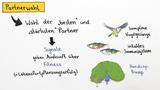 Partnerfindung im Tierreich