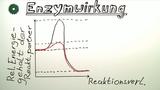 Enzyme – Einfluss auf Reaktionen
