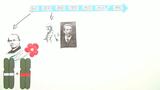 Chromosomentheorie der Vererbung