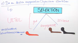 Die Selektion – Darwins Evolutionstheorie