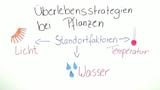 Anpassung der Pflanzen – verschiedene Umweltverhältnisse