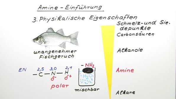317 amine einf%c3%bchrung gk