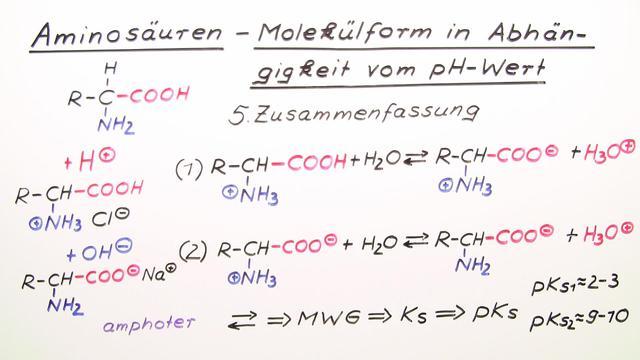 Aminosäuren – Molekülform in Abhängigkeit vom pH-Wert
