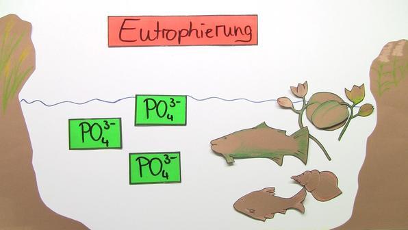 Eutrophierung vorschaubild
