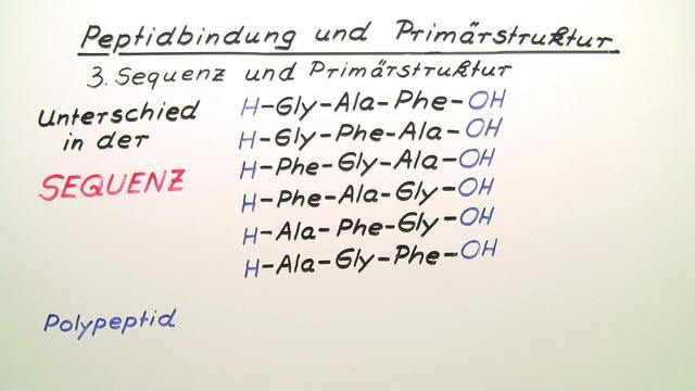 Peptidbindung und Primärstruktur
