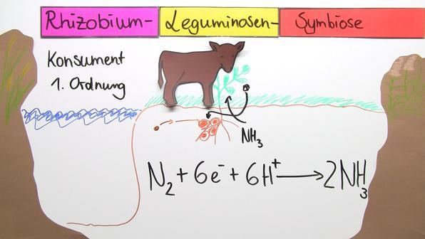 Stickstoffkreislauf vorschaubild