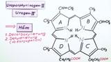 Fünfgliedrige Heterocyclen – Vom Urogen-III zum Häm