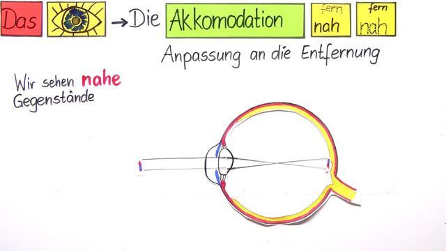 Sehvorgang im Auge – Adaptation und Akkomodation