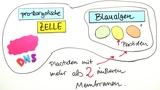 Endosymbiontentheorie – Primäre und Sekundäre Endosymbiose