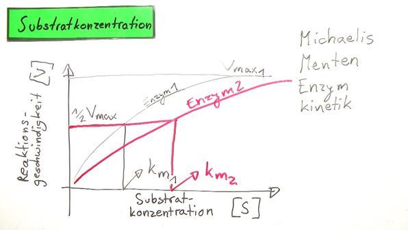 Einfl%c3%bcsse auf die enzymwirkung
