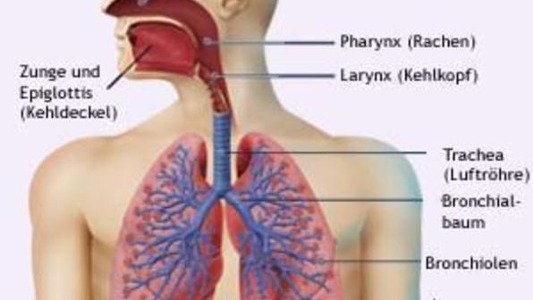Atmunsorgane