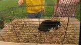 Willi und die Hasen - Haltung und Pflege von Kaninchen