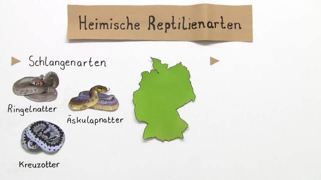 Schutzmaßnahmen für Reptilien